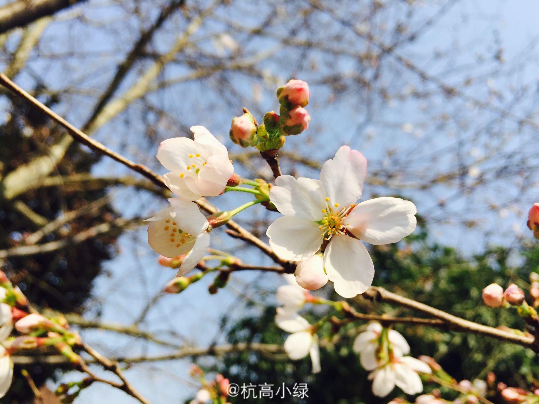在浙江省杭州高级中学衔接是一番的体验?文言文初高中就读图片