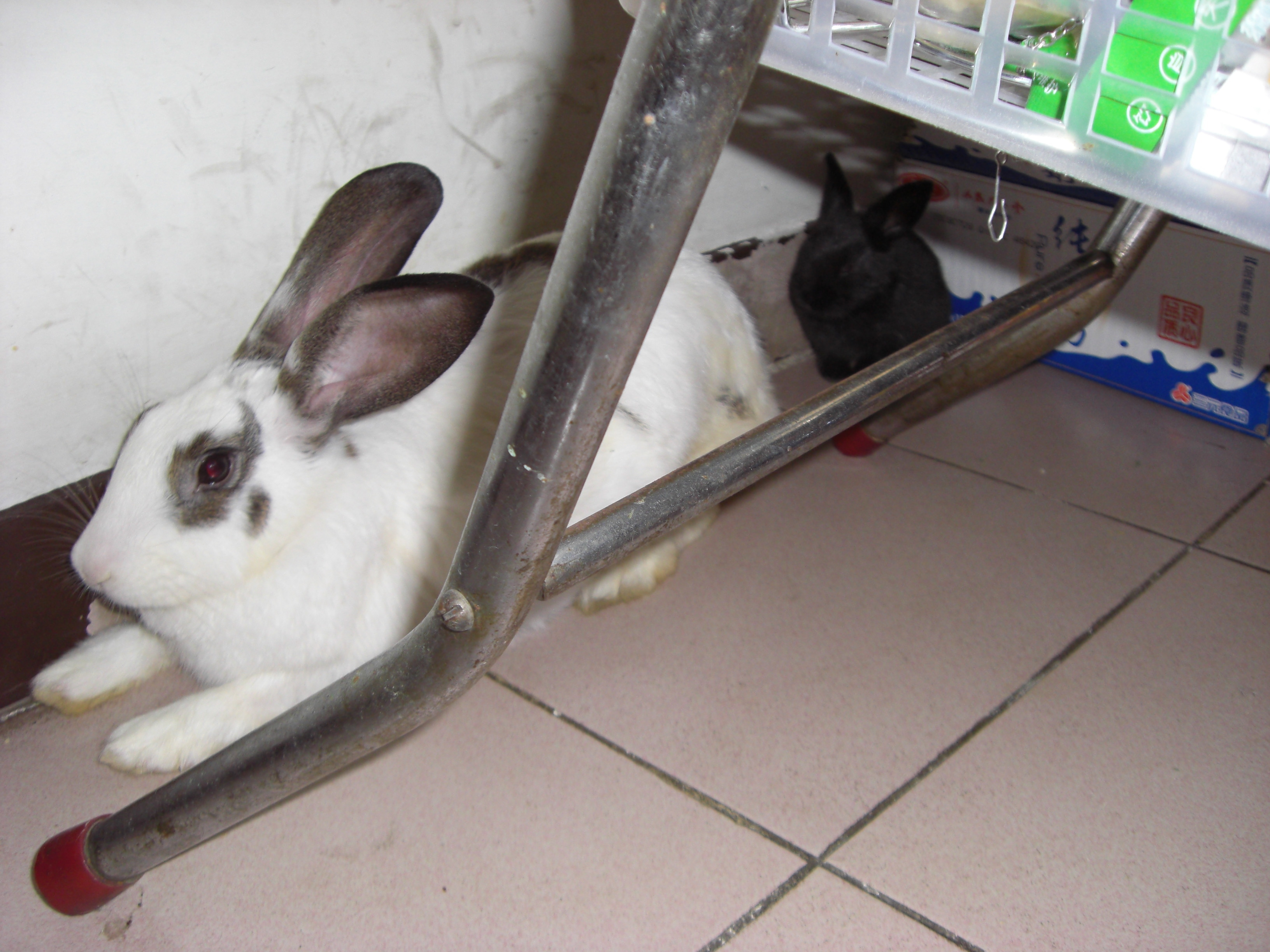 兔子/为了挽回包子的形象,再发几张他们下一代的Q图加点分吧: