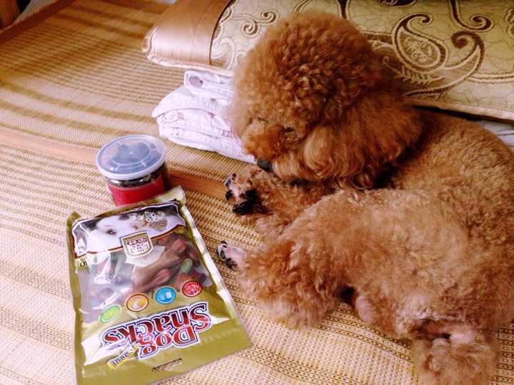 狗吃2种混一起狗粮_4、5种狗粮混在一起喂_吃狗粮是种怎样的体验