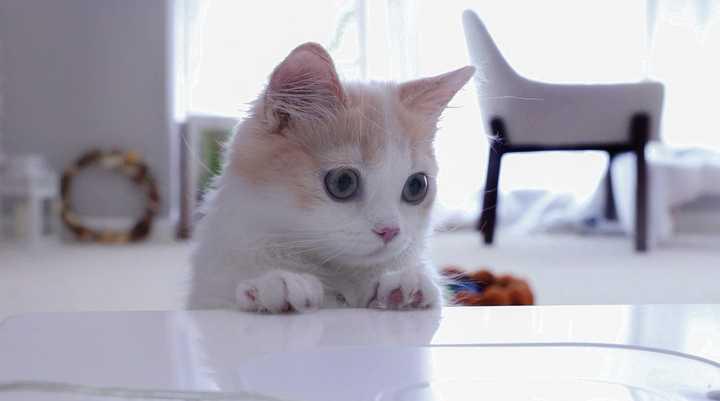 加一个我喜欢的猫咪呀,花花与三猫家的年糕f^^*)