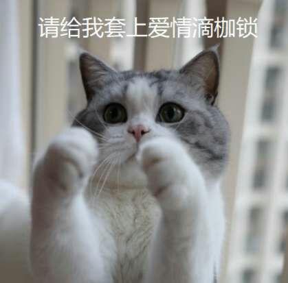 花花与三猫catlive 还请大家多多关注我们的老父亲老母亲~ 她们家