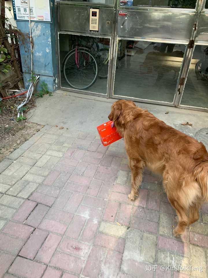 老一辈不喂狗粮的养狗方式科学吗_好之味幼狗狗粮多钱一袋_最科学简单的自制狗粮