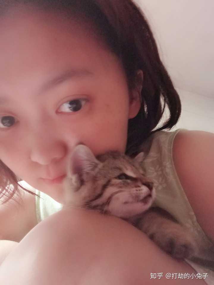 搜逼奶�_把一只刚出生的小奶猫一直养大是什么感觉?