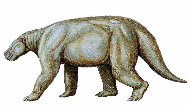 (本文图片如非注明即来自wiki) 古新世(前6500w~5300w) 海洋:蛇颈龙
