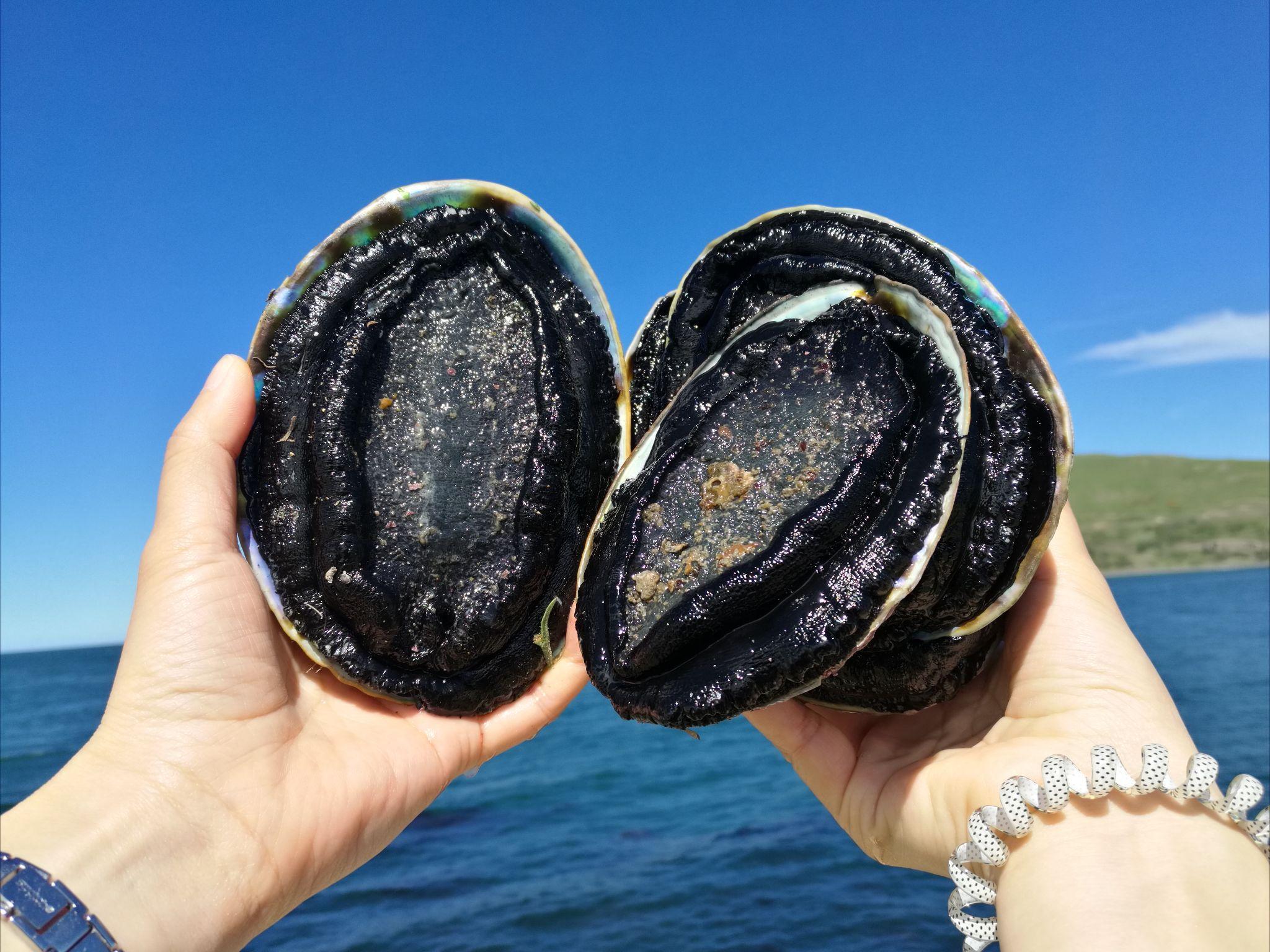 十块钱三个的螃蟹和鲍鱼中超贵的鲍鱼吃起来有江夏吃传说图片