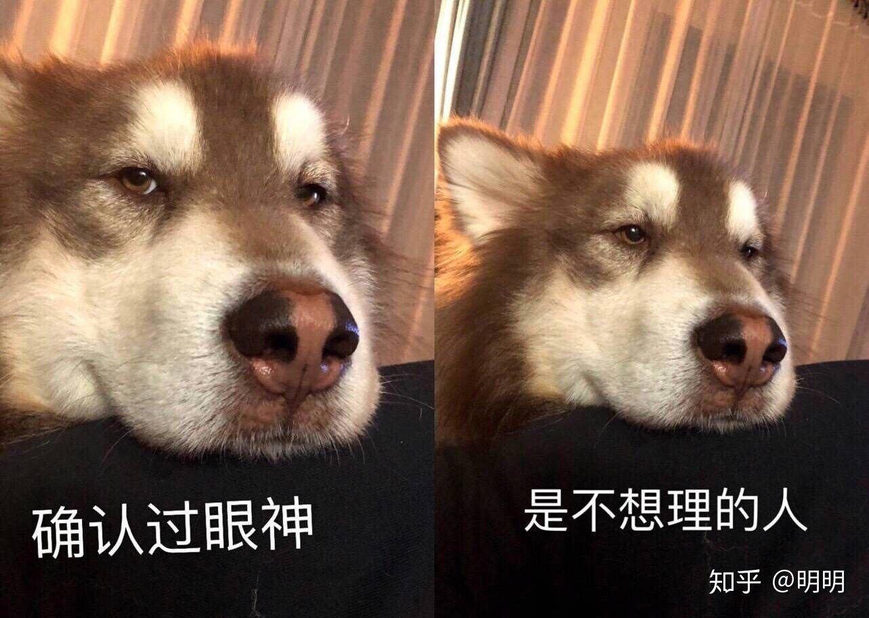 有哪些怼表情的死人?刘梓晨最新表情包图片