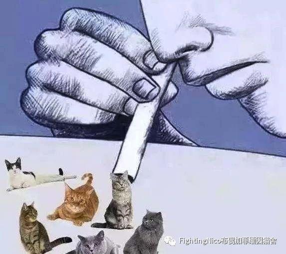 吸猫:指一些人类(甚至某些动物) 对猫咪上瘾,每天必须 现实中吸吸猫图片
