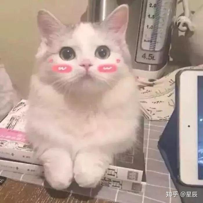 图片是不是不聊天猫咪发表的女生喜欢情?时候包大全贱表情男生老师图片