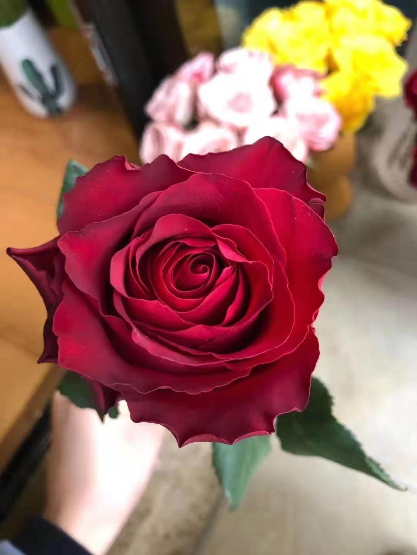 你所知道的鲜花到底有多便宜?相关的图片