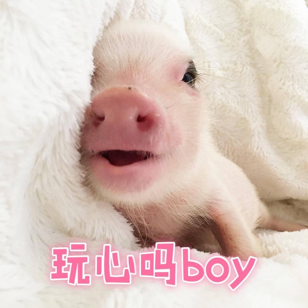 有哪些猪的搞笑图片或者表情?为美丽的搞笑图片图片