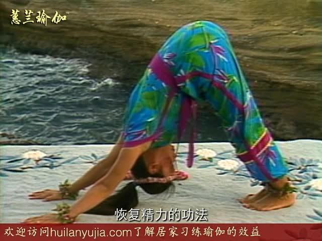 初级犁式,单腿交换伸展式 全骆驼式,顶峰式,完全瑜伽呼吸术 蹲功,狮子图片