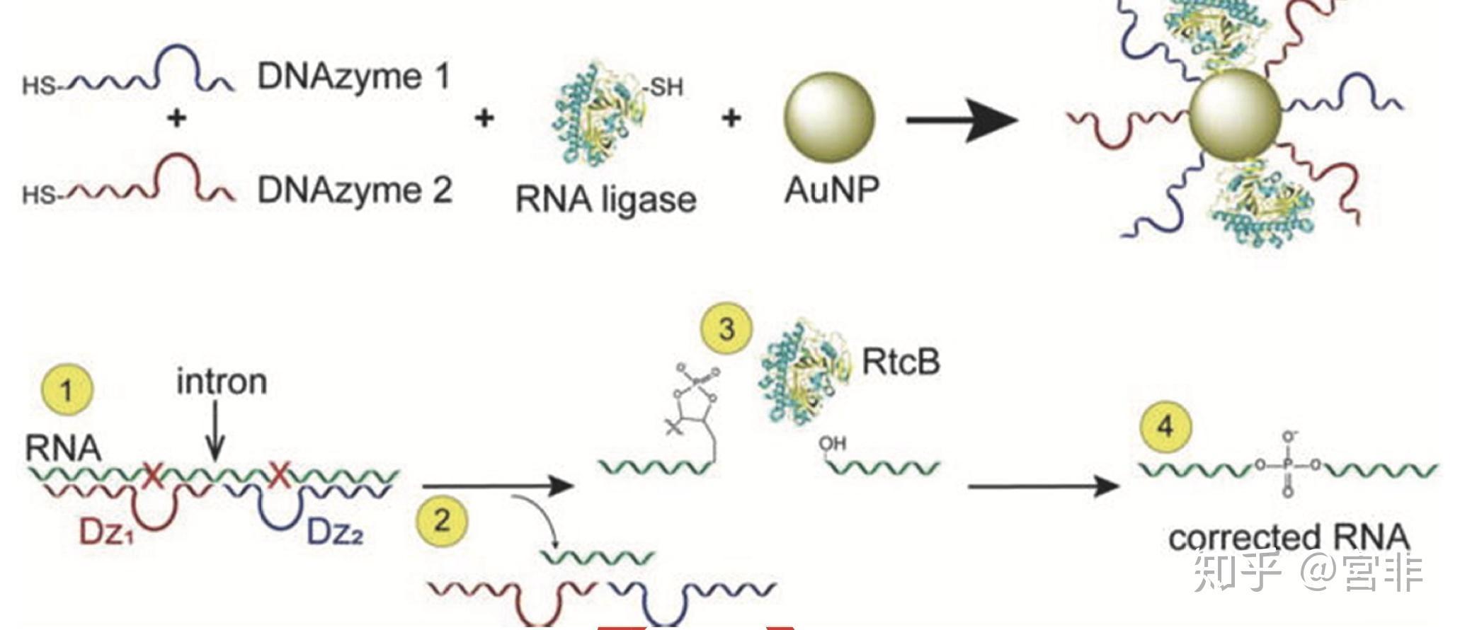 纳米酶和能产生催化效果的纳米材料(如Mgo催化合成查尔酮)有什么区别?纳米酶在精细化工中有什么应用?相关的图片
