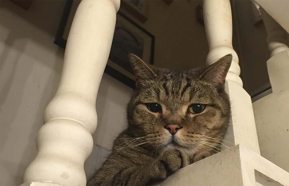 我用过的自动猫砂盆们(一)