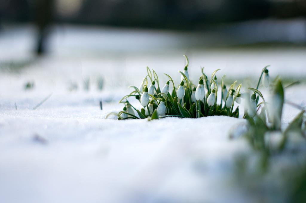 【花名册】雪一片一片一片一片……