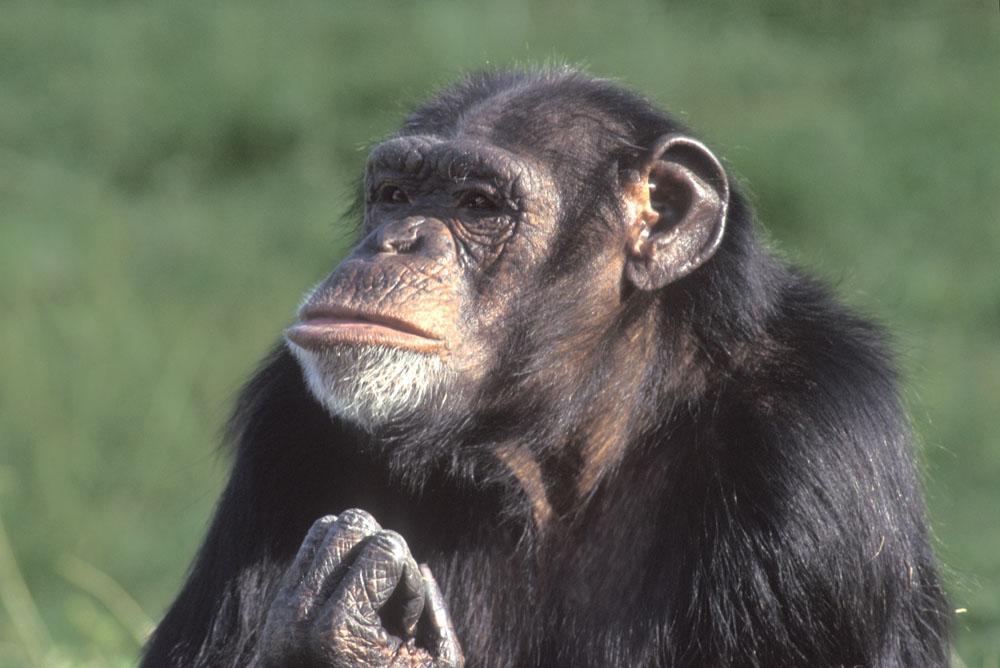 好的投资策略首先要战胜大猩猩
