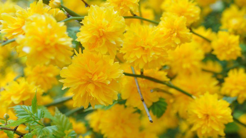 【花名册】天下最好看的黄