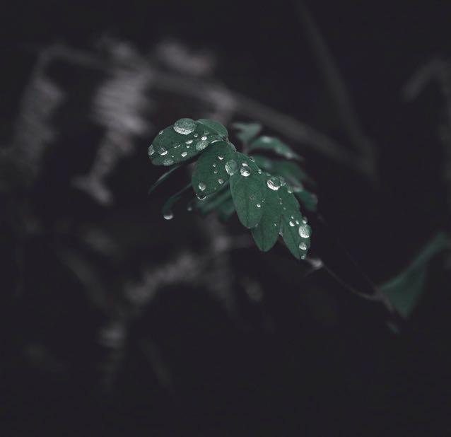greenrd