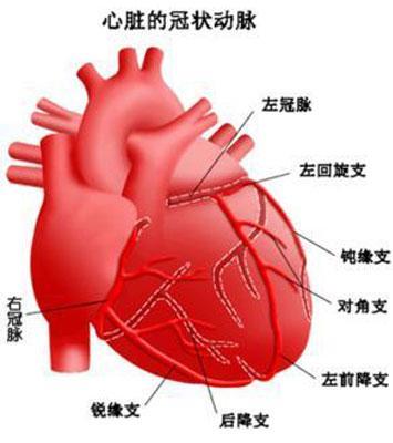 心脏血管前降支_中重度冠心病一定要放支架吗? - 知乎