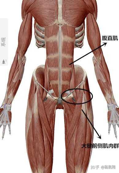 竖脊肌_怀孕对于孕妇的脊椎有什么影响?如何进行锻炼来降低生孩子