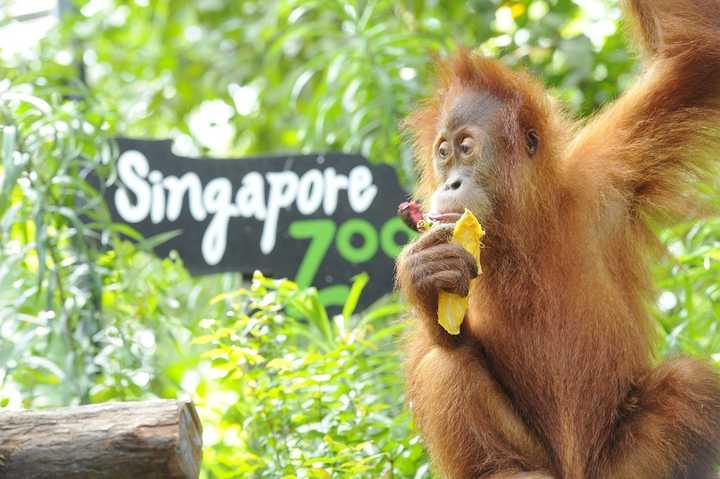 好玩儿的新加坡