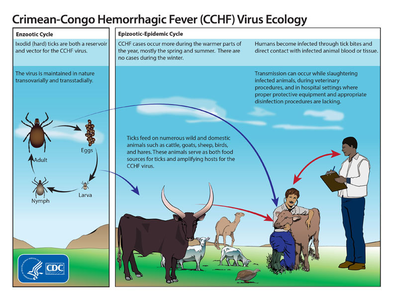 病毒性出血热  之  克里米亚-刚果出血热