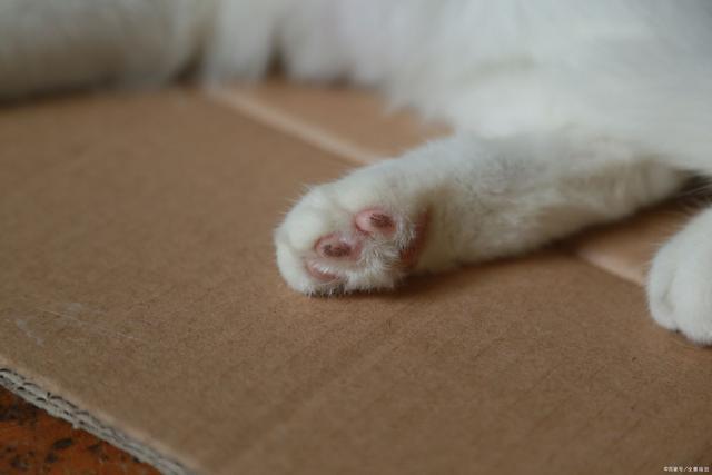 十大猫咪冷知识,你都知道吗?