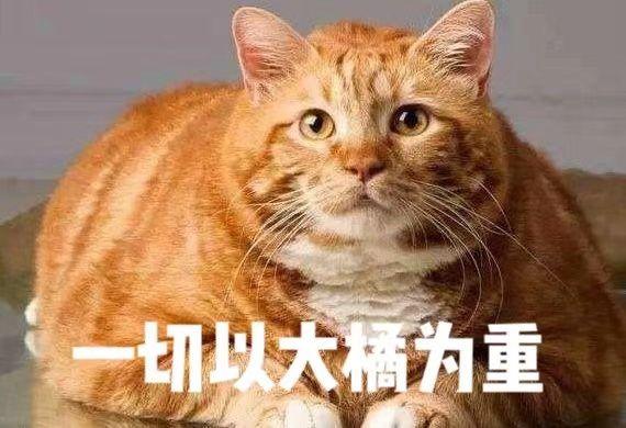 互联网加班铲屎官:每天喂多少猫罐头合适?