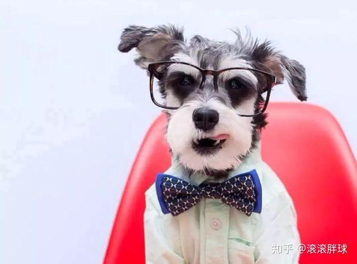 原来狗狗也有智商排行榜,来看看你家狗狗的智商高不高(图6)