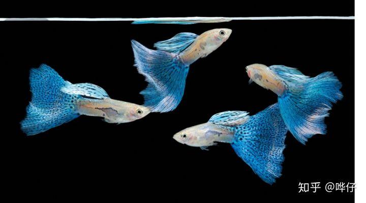 孩子问:鱼会睡觉吗?鱼会喝水吗?鱼会撒尿吗?我的回答很烧脑(图3)