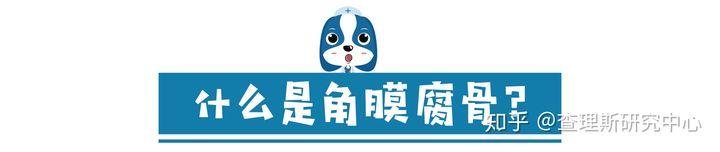 猫咪角膜腐骨(坏死性角膜炎)是什么病?怎么治疗啊?(图4)