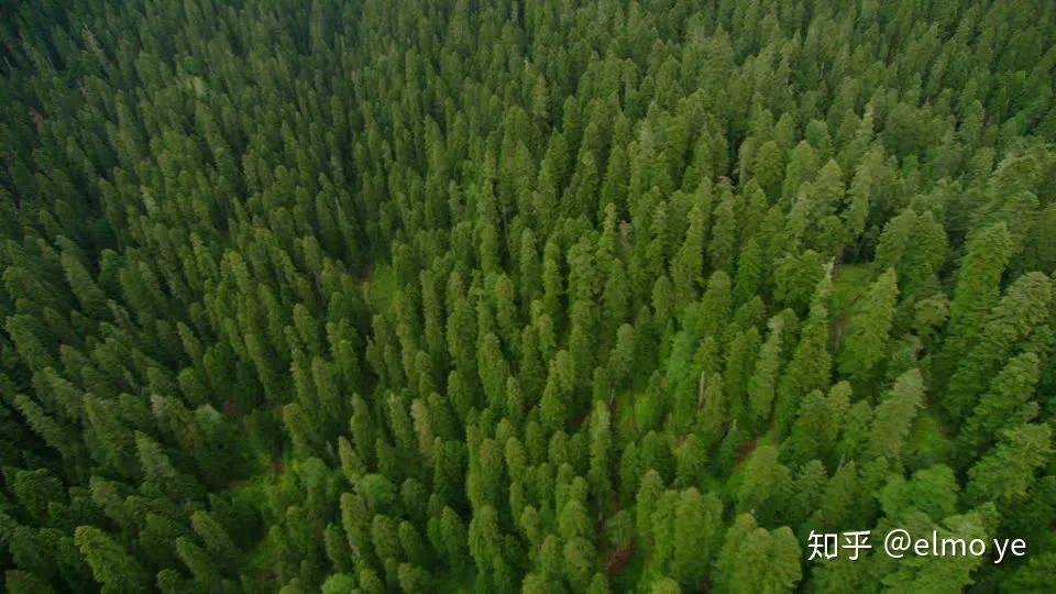 種類 針葉樹 薪について【薪ストーブのファイヤーサイド】