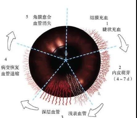 猫咪突然一只眼睛发红睁不开?警惕角膜炎5种常见症状(图7)