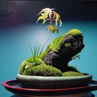 上水石上栽什么植物好(吸水石上种什么植物)插图(1)