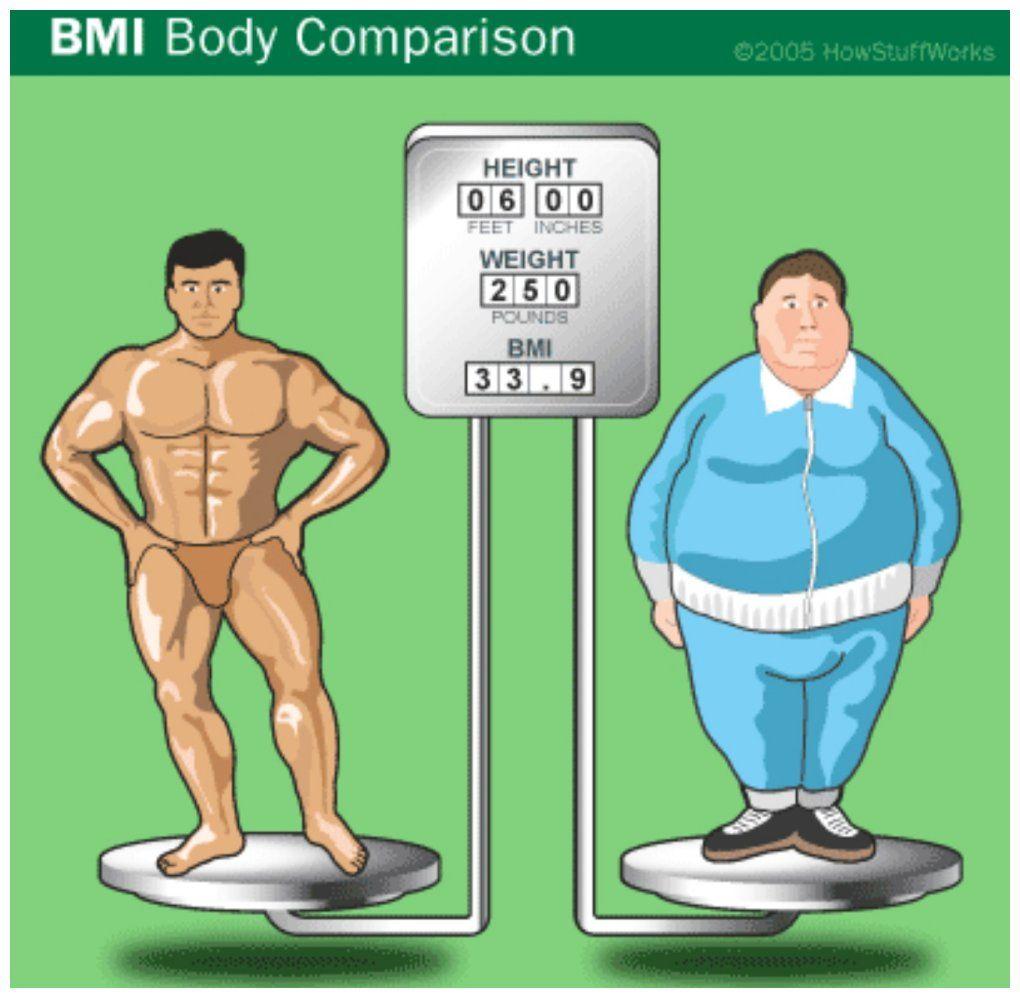 率 測定 脂肪 体