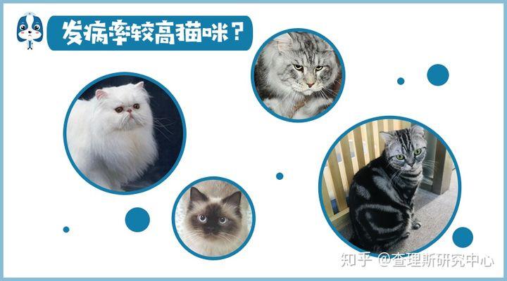 猫咪角膜腐骨(坏死性角膜炎)是什么病?怎么治疗啊?(图13)