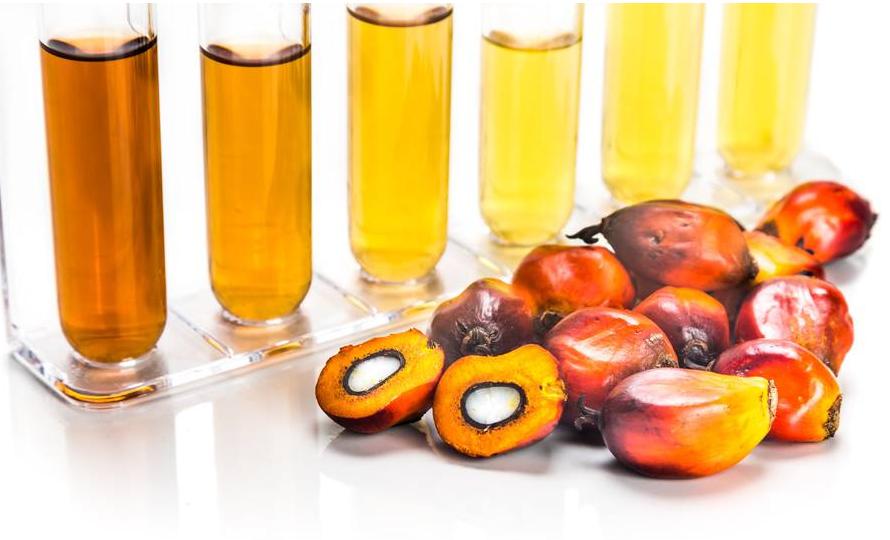 化工小知识:揭开棕榈油制成环保生物柴油的秘密!