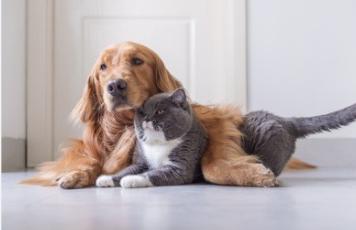 生物不当-干粮对猫身体的危害