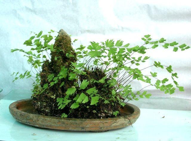 上水石上栽什么植物好(吸水石上种什么植物)插图(3)