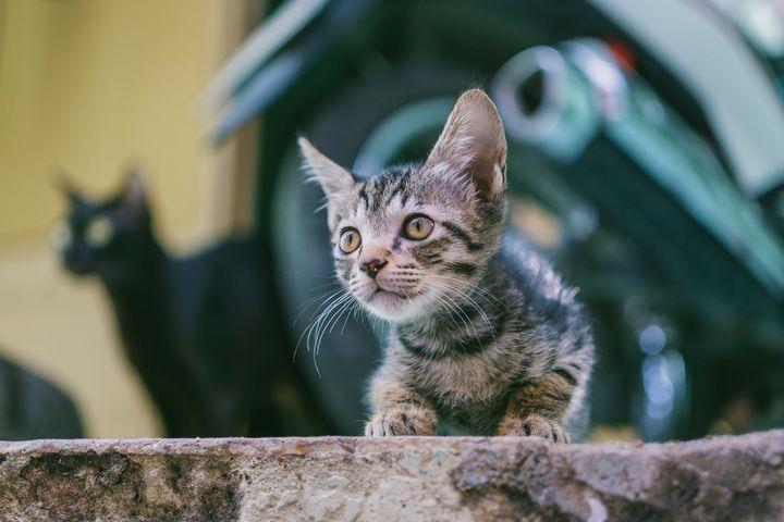 猫咪有寄生虫时,身体会有哪些信号?