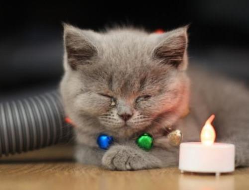 猫打喷嚏不是小事(图4)