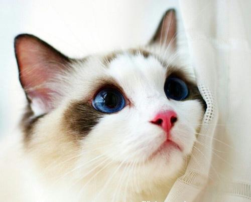 猫打喷嚏不是小事(图2)