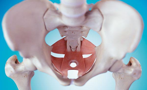 早泄训练方法——pc肌锻炼法