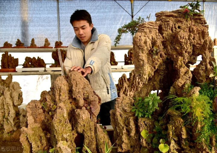 上水石种什么植物最好(上水石怎么养出苔藓)插图(1)
