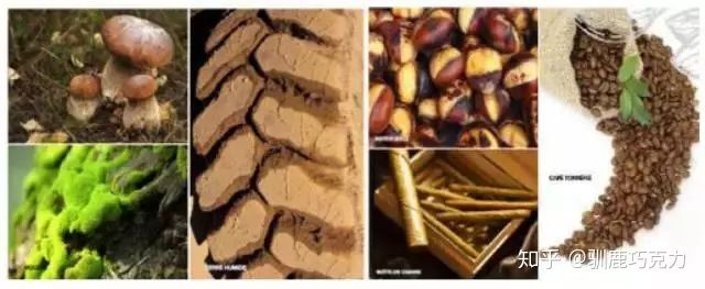 品鉴巧克力正确的步骤巧克力5