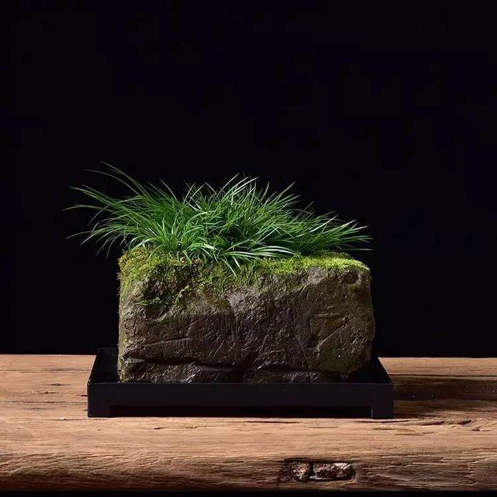上水石上栽什么植物好(吸水石上种什么植物)插图(2)