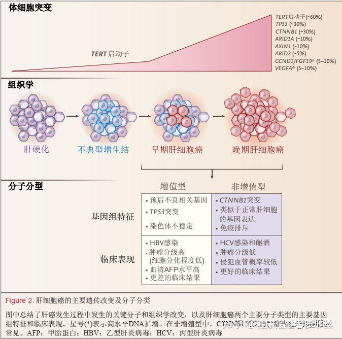 肝 細胞 癌
