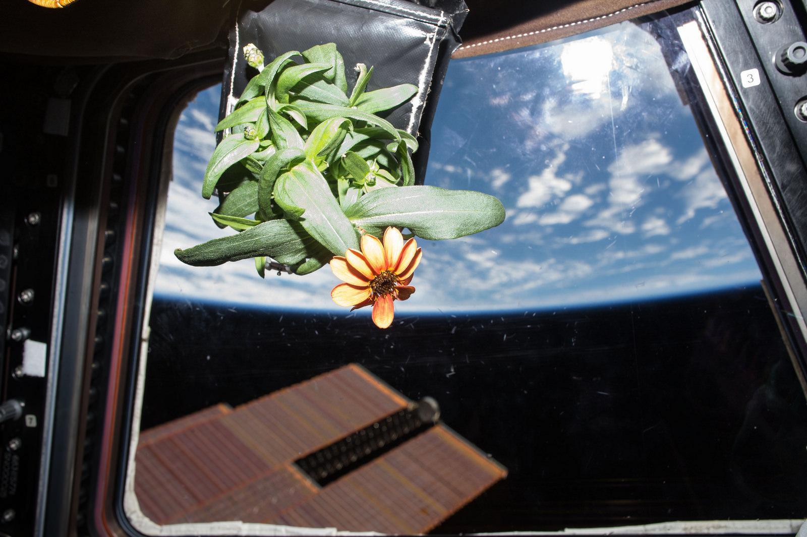 太空中的实验——涡虫、玫瑰与西葫芦