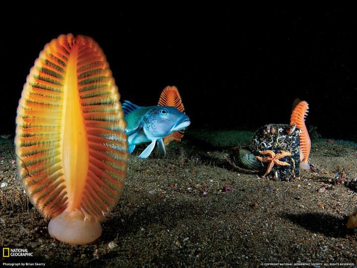 深海1万米巨型生物之谜,大多都吃垃圾(附20张深海奇特生物)