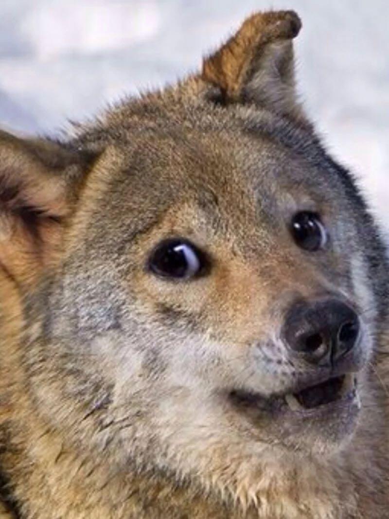苏北狗这一带有明显地域歧视的名字是怎么来的