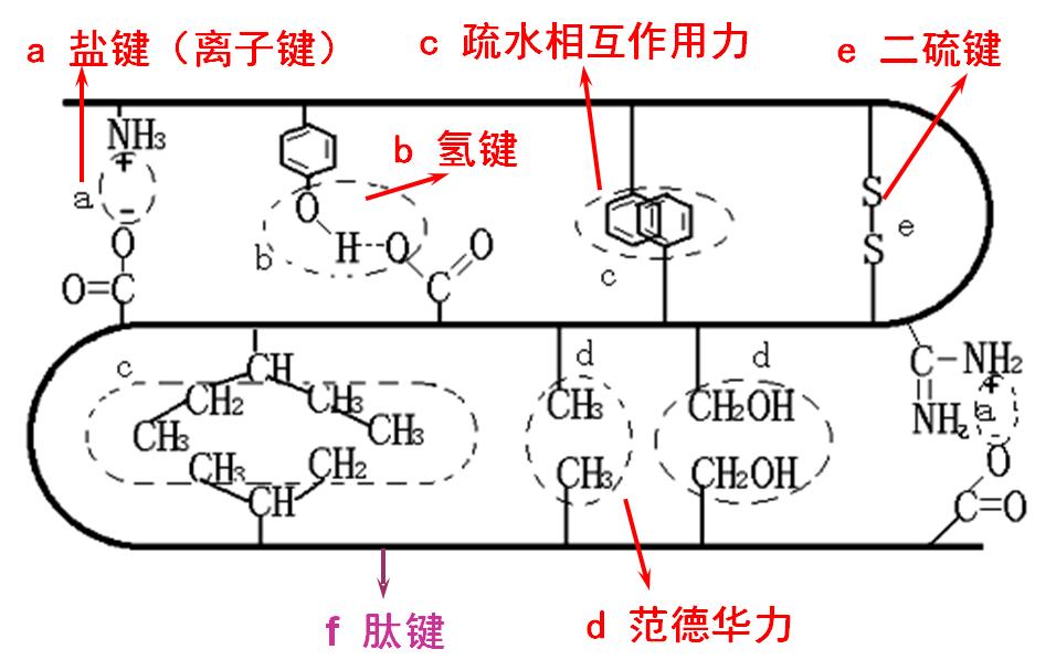 蛋白质的三级结构有哪些特征?